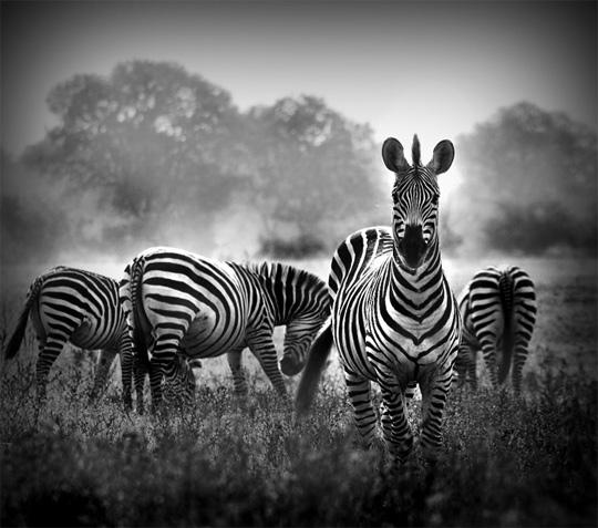 Atmosféra fotografie vynikla až po převodu do černobíla. Jde jak o hru světla, tak křivek