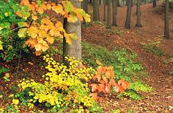 podzim2