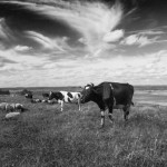 Jak vytvořit fascinující černobílou fotografii? – Návod Photoshop